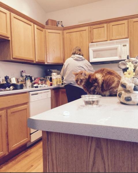 instagram fun food family cute cats