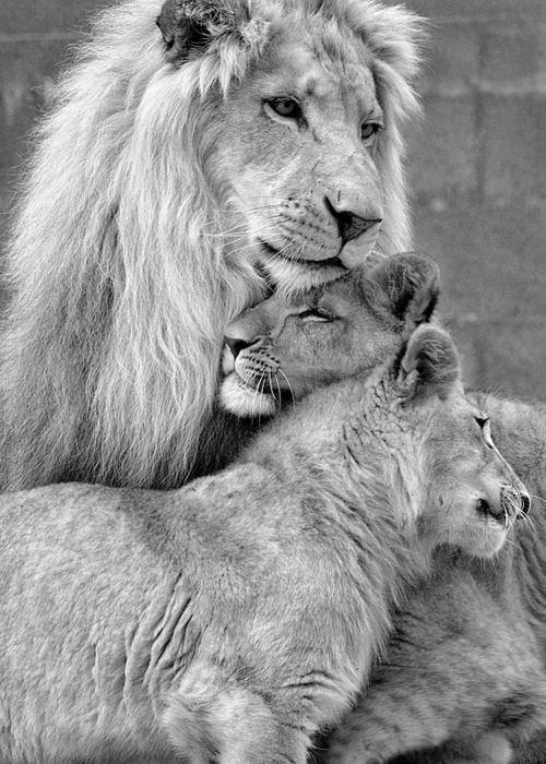 family closeness