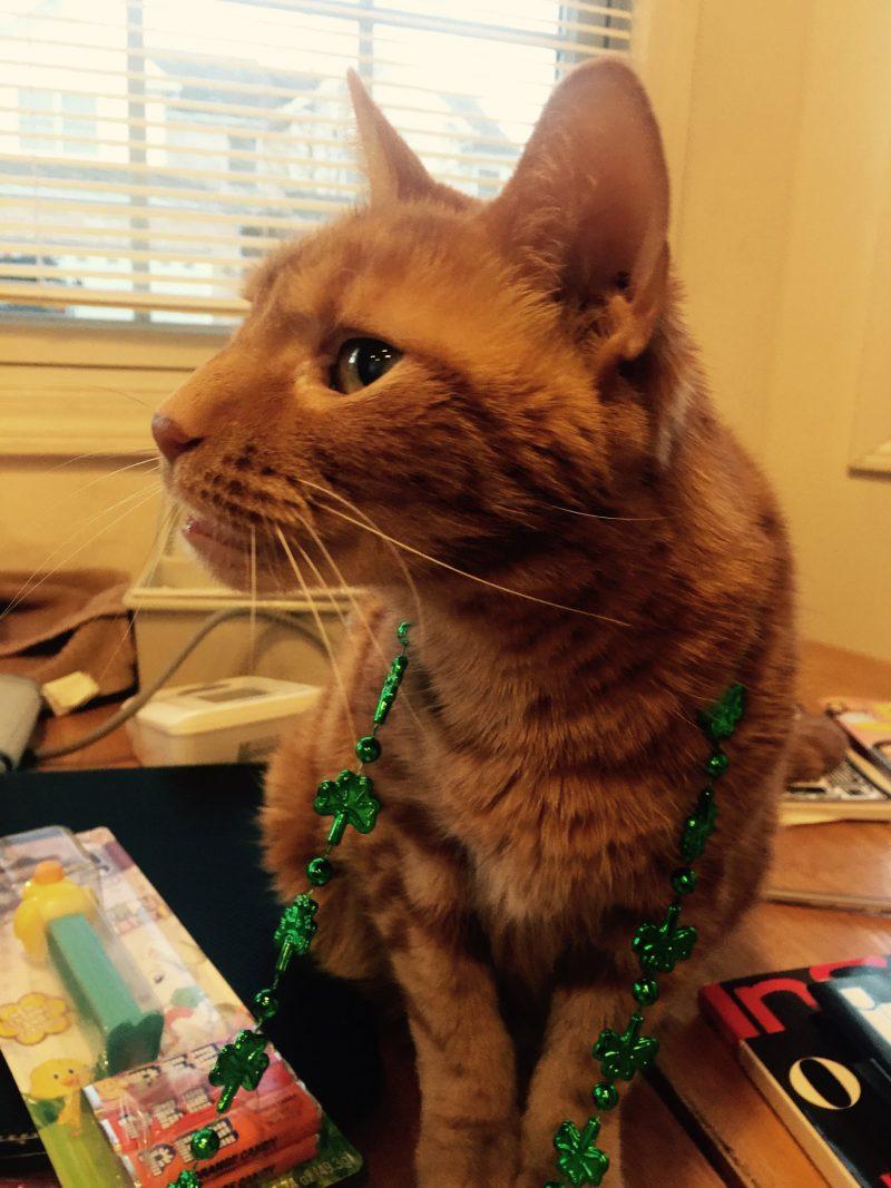 St. Patrick's Day Spirit