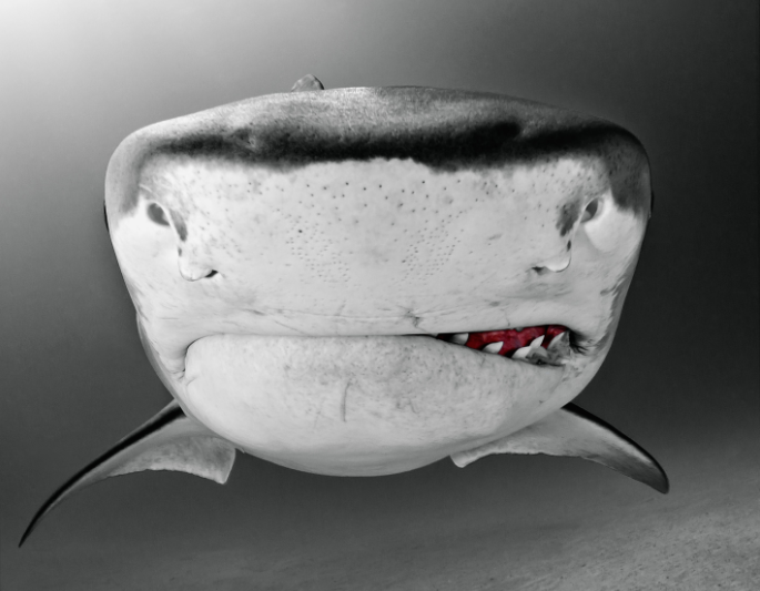 Shark Portraits